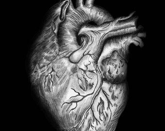 HEART Anatomy drawing. DA VINCI style.