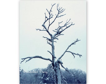 Winter Photography, Tree Print, Snow, Nature Photography, Art, Forest, Black & White Photography, Wall Art, Blue, Home Decor, 8x10, 11x14
