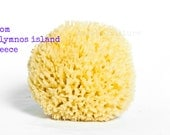 Natural Sea Sponge 5.5'' from Kalymnos island-Greece Honeycomp - Top quality