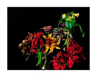 Protography Fine Art Nature morte