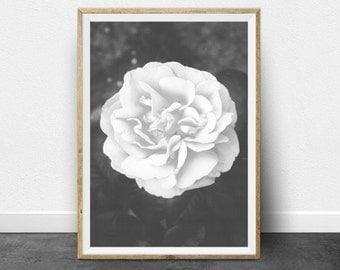 Black and White Print, Rose Print, Printable Art, Black and White Photography, Printable Wall Art, Nature Photography, Antique Print,