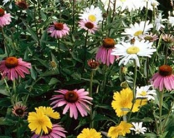 1,000 Wildflower Seeds Annual Part Shade Wildflower Mix Flower Seed Mix