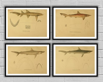 Shark Print set of 4, Nautical art print set, Ocean print, Natural History home decor, Shark wall art, Ocean Decor, fisherman gift, 105-108