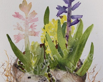 Hyacinths - Giclee Print
