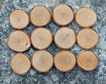 12 White Birch Slices