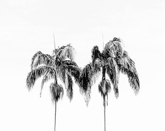 Modern Black and White Photography, Monochromatic, 8x10 Black and White Prints, Palm Tree Print, Black and White Wall Decor, Square Print