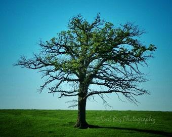 CANVAS ART, Green Trees, Spring Trees, Tree Photography, Spring, Green Leaves, Nature photography, Photo Art
