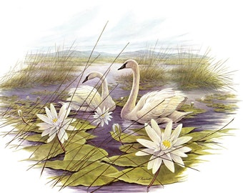 A Large Print (12 inches tall and 15 inches wide) of the Trumpeter Swan painted by James Lockhart for the book Wild America