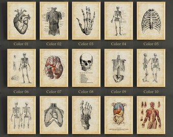 Human Anatomy Antique Art Print Vintage Medical Art Poster Gifts Idea Studio Wall Decor Gift Linen Print - Buy 2 Get 1 FREE - 420s2g