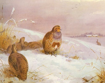 1981 bird print grouse and hare in the snow by archibald thorburn