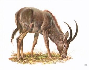VINTAGE ANIMAL PRINT, Animal Print, Bluebuck, Bluebuck Print, Animal Print, Animals, Ram Print, Ram Plate, Ram Lithograph, Wildlife Print,