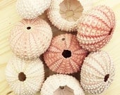 Multiple Quanity Pink/White Sea Urchin Shells/Tests - FAST and FREE SHIPPING wholesale, wedding, party, thank you, event, name card