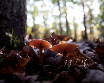 Bright Fungi