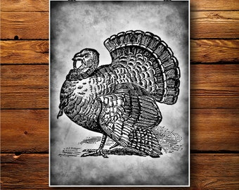 Turkey Decor, Bird Poster, Thanksgiving Art, Birds Print  BW0245