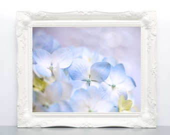 Blue Hydrangea Photograph Print