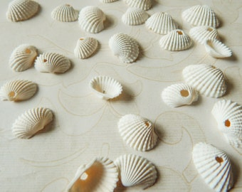 Craft Shells, Jewelry Charms, Beach Wedding Decorations, Nautical Decor, Seashells with Holes