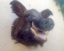 Taxidermy wild boar head