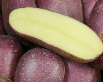 Potato Seed - ROYAL BLUE - Purple Skin & Yellow Flesh - Great Tasting- 6 tubers
