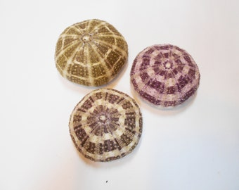 "Set of 3 (three) Alfonso / Gator Sea Urchins 2"" - 2 1/2""  for Crafts, Airplants and Beach Decor"