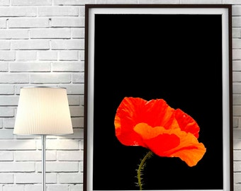 Poppy flowers Print Poppy flowers photo Poppy Printable Art Poppy flowers photo Red flowers Download  Floral Printable Nature Digital Print