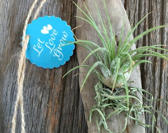 Driftwood and Tillandsia Event Favors With or Without Tag by Zentilly©