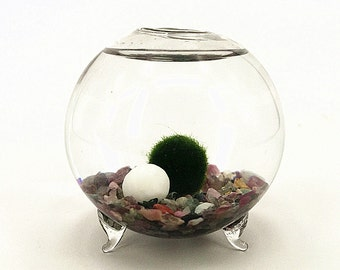 Marimo Orb Terrarium kit - 6cm footed glass vase,aquatic living moss ball,tourmaline aquarium gravels,birthday gift for friends