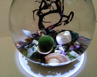 "Marimo Terrarium kit - Night Blooming - 4"" Round Terrarium with LED Light,Japanese Moss Ball,Tourmaline Gravel,Seashells and Sea Fan"