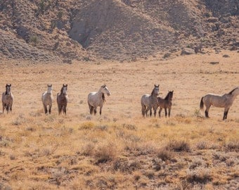 Horse Photography, Wild Horses, Wild Mustangs, Horses, Fine Art Photography, Large Wall Art Print, Colorado