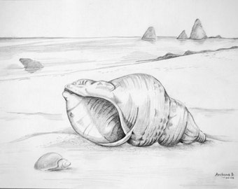 Seashells pencil sketch on the paper