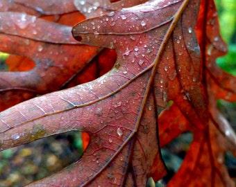 "Red Autumn Leaves, Red Autumn Decor, Leaf Print, Leaf Art, Fall Print, Autumn Photo, Fall Decor, Red Decor, Nature Photo ""Fall Raindrops"""