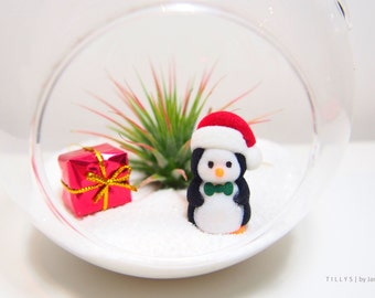 Santa Penguin Wonderland Air Plant/Tillandsia Terrarium Kit