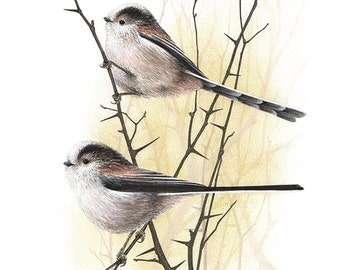 Long Tailed Tits - Aegithalos caudatus A4 limited edition art print