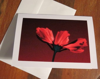 Single Red Cosmo. Photo Greeting/Note card. Blank inside.