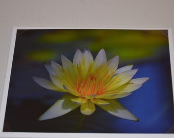 White Lily Photo Notecard