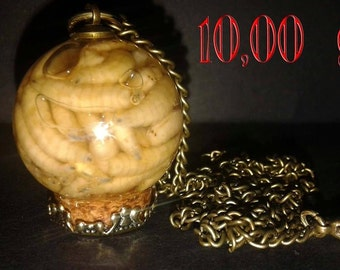 Fly Larvae Necklace
