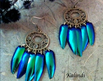 "Earrings with natural wings beetle borers ""Salem"""