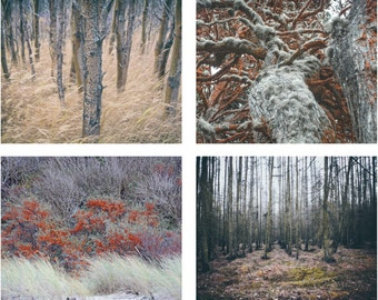 Autumn Mood - Forest Digital Photo - Nature Photo - Forest Photograph Set - Set of 4 - Digital Photo Set - Digital Photo - Digital Download