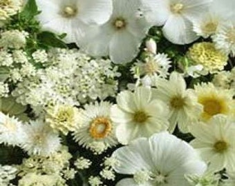White Shades of Color Flower Seeds/Wildflower/Annual   75+