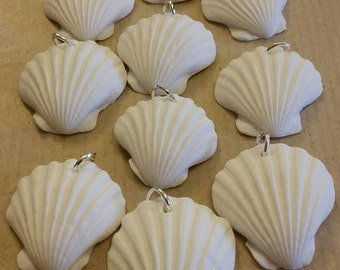 10 x White clam shell seashell seaside beach charms with jumpring