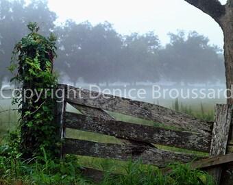 Photography, Foggy Louisiana Morning, Grand Couteau Louisiana, Photography Print, Louisiana Photography
