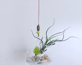 Hanging Air Plant Terrarium (Green Bead)