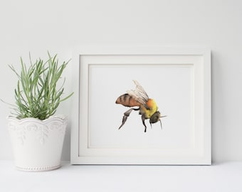 Bee print of watercolor painting, B212DL, Bee downloadable print, bumble bee print, garden wall art, insect digital download