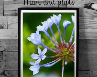 Flower photography, purple flower, violet flower, macro photography, nature photography, color photography, instant download, home decor