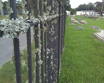 Graveyard Lichen