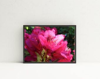 Rhodoendron Landscape - Rhododendron Photography,  Rhododendron Prints,  Rhododendron Art, Flower Prints, Flora Wall Art, Floral Wall Decor