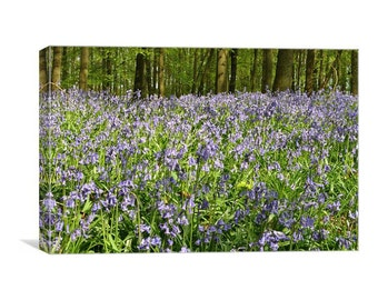 Down Among The Bluebells Canvas print