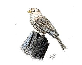 Sparrow original drawing