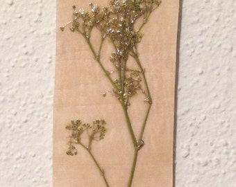 Pressed Baby's Breath on Wood 5