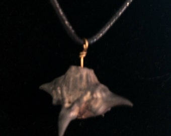 water (caltrop) chestnut, devil seed pod on a hemp necklace