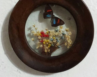 Vintage butterfly in wooden frame